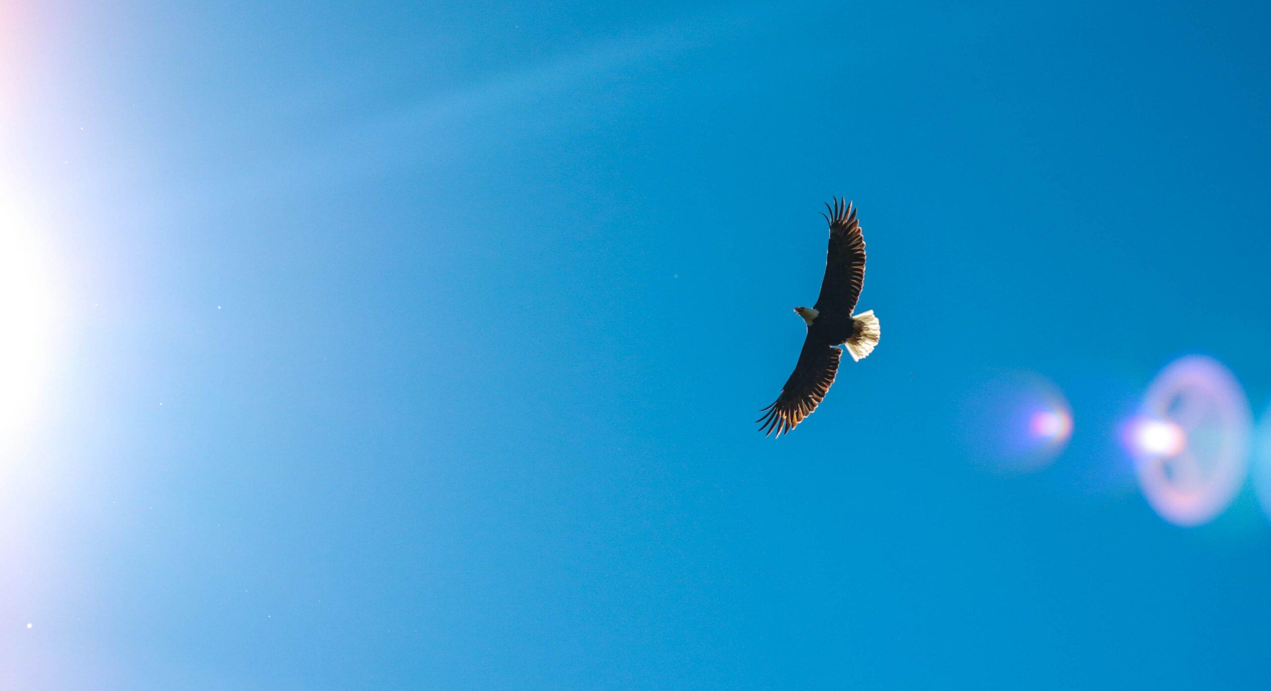 adler fliegt am blauen Himmel